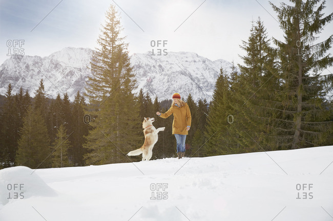 Woman playing with husky in snow covered landscape, Elmau, Bavaria, Germany