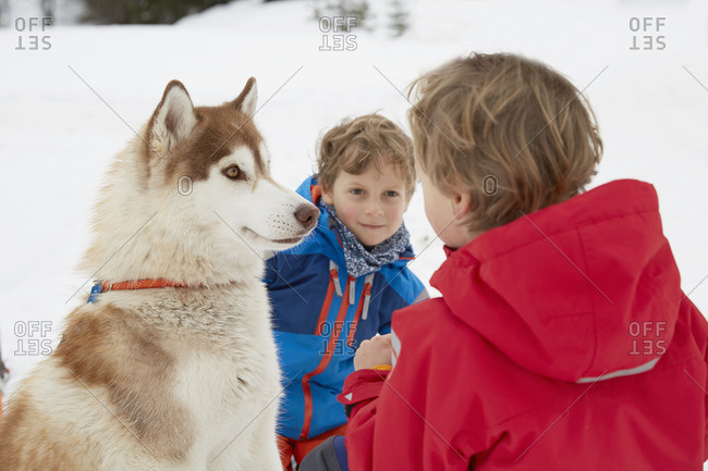 Boy and brother crouching with husky in snow, Elmau, Bavaria, Germany