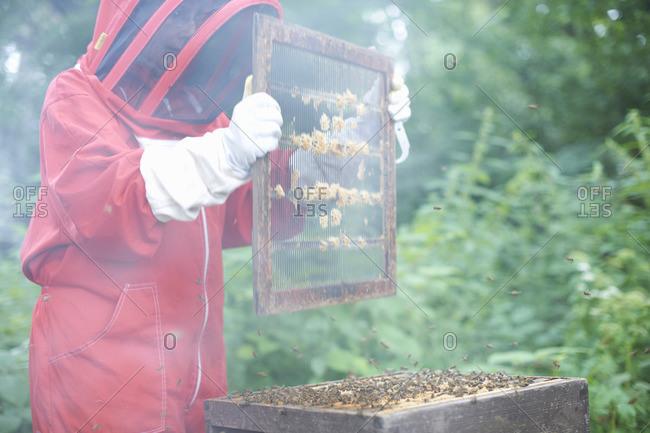 Beekeeper holding hive frame
