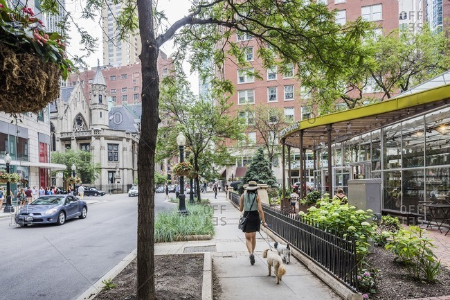 Chicago, Illinois:  Walking the dogs in Rush Street