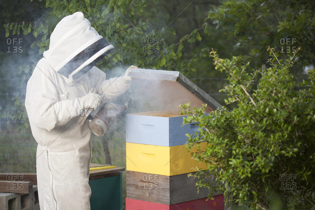July 13, 2016: Beekeeper using smoker on a hive