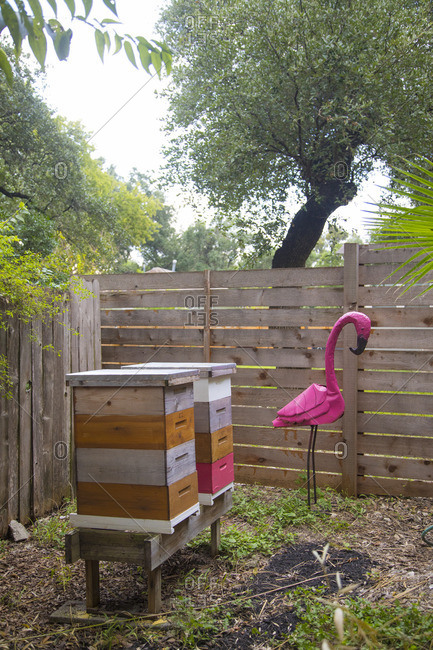 Beehive boxes in a yard