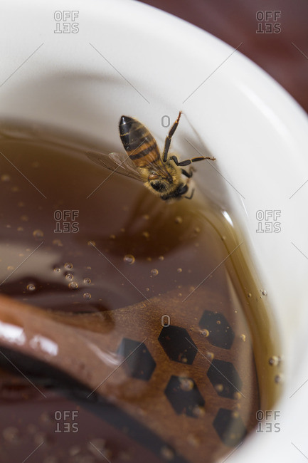 Bee on a bowl of honey