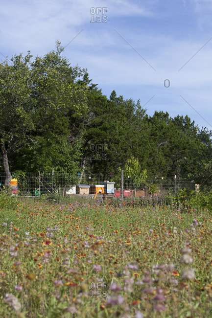 Beehive boxes among wildflowers