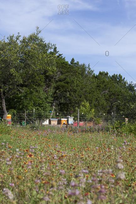 Beehive boxes among wildflowers