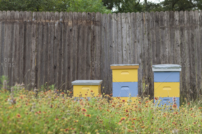 Beehives among wildflowers by fence