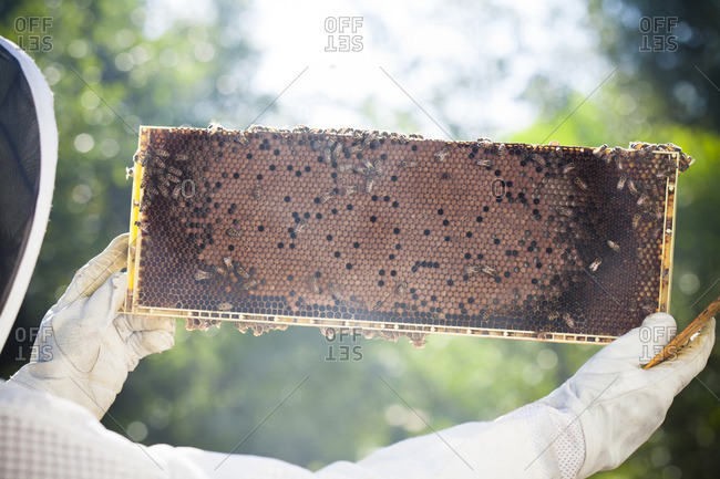 Beekeeper with honeycomb in hands