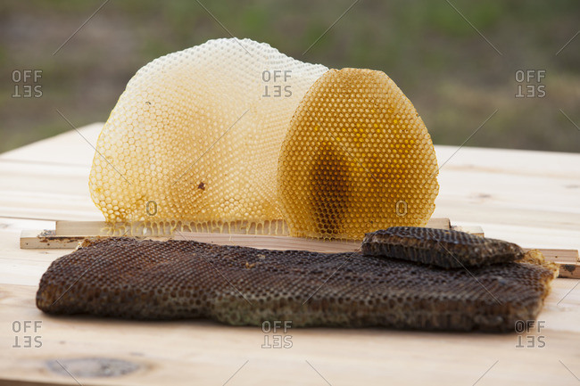 Honeycombs on table outdoors