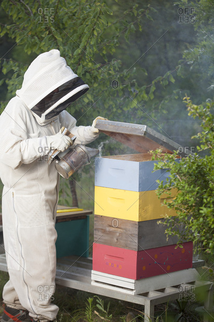 July 13, 2016: Beekeeper using smoker on hive