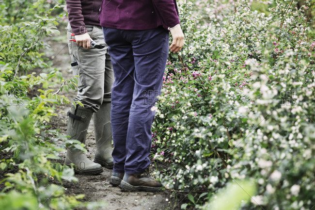 Two people standing in the flowering cutting beds at an organic flower nursery.