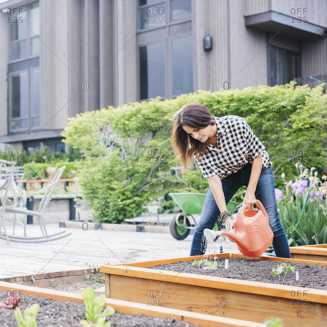 Woman with long brown hair working in a garden, watering seedlings in a bed.