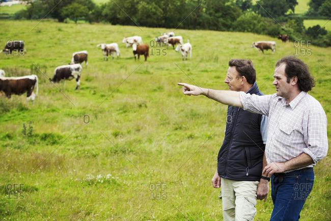 Two men and a herd of English Longhorn cattle in a pasture.