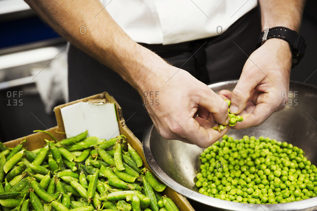 Close up of a chef shelling fresh green peas.