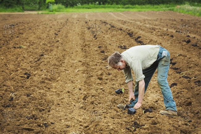 A man bending over planting a seedling in a field.