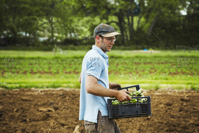 A man carrying a tray full of seedlings across a field.