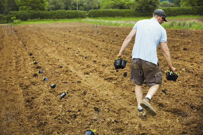 A man walking across a field carrying plant pots full of seedlings.