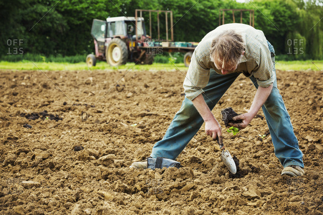 A man bending, using a trowel, planting a small seedling in the soil.