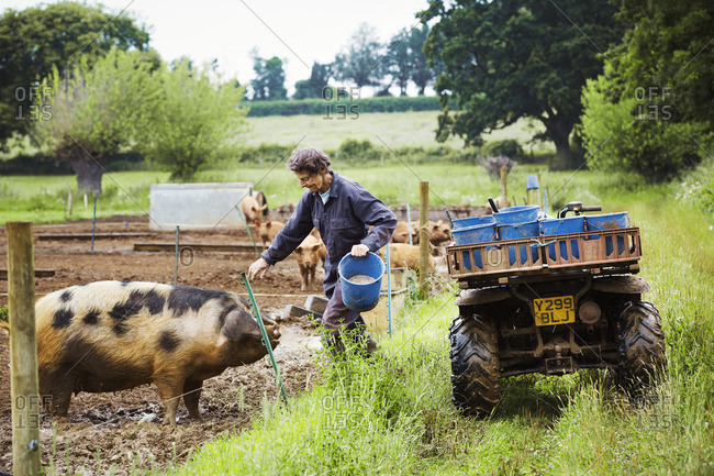 A woman climbing over the fence of a pen to feed a pig next to an ATV full of buckets.
