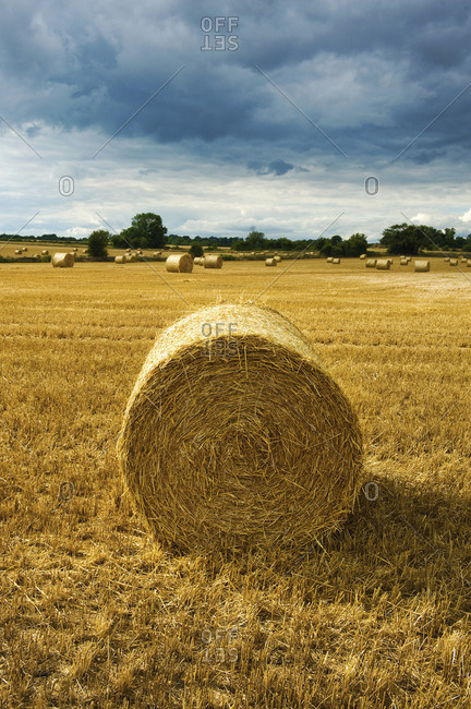 Bales of straw in a field full of stubble.