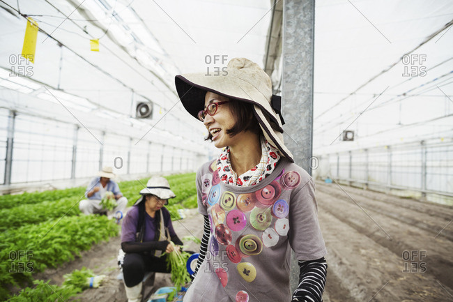 Two women working in a greenhouse harvesting a commercial crop, the mizuna vegetable plant.