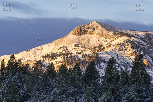 A fresh dusting of snow coats the trees and Stevens Peak at sunrise in Hope Valley, California.