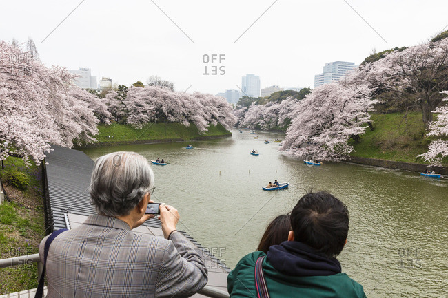 Tokyo - March 4, 2016: Rowing boats and blossoming cherry trees, channel of the Kitanomaru park in the imperial palace (Chiyoda), Tokyo, Kanto region, Honshu, Japan