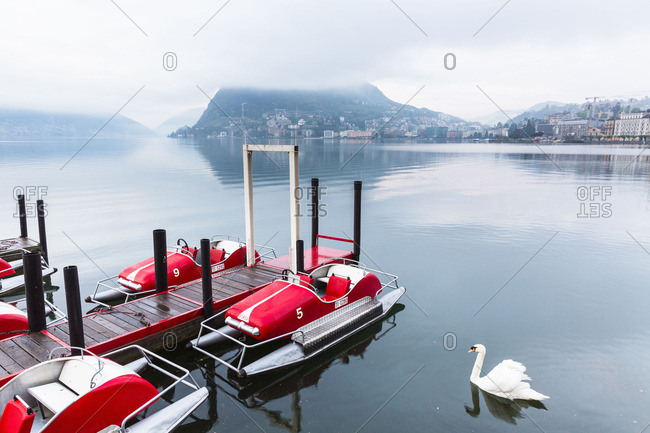 Lugano - March 4, 2016: Swan in front of moored pedal boats in Lake Lugano in front of Monte San Salvatore, spring, Lago Lugano, Lugano, Ticino, Switzerland, Alps
