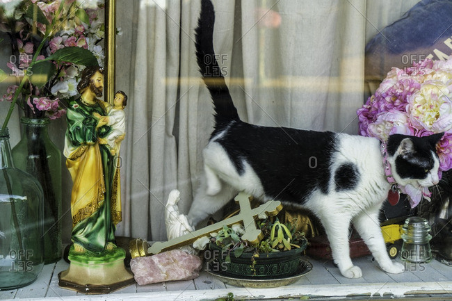 Cat walking through display window of shop and knocking over religious items