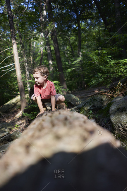 Little boy playing on a fallen tree in a forest