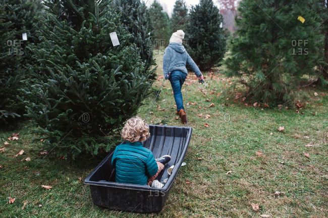 Sister pulling her brother in a sled on a Christmas tree farm