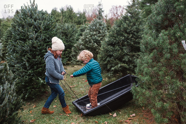 Sister and brother playing on a sled at a Christmas tree farm