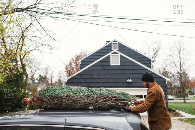 Man untying a Christmas tree from the top of his car