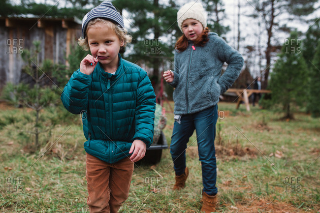 Brother and sister eating candy canes on a tree farm