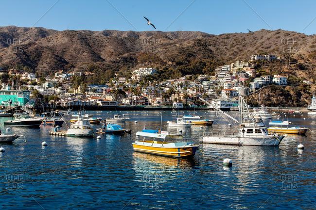 Santa Catalina Island, California - December 14, 2013: Boats in the harbor of Santa Catalina Island
