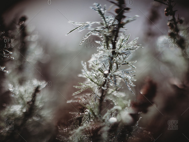 Close-up of a tree branch covered in ice