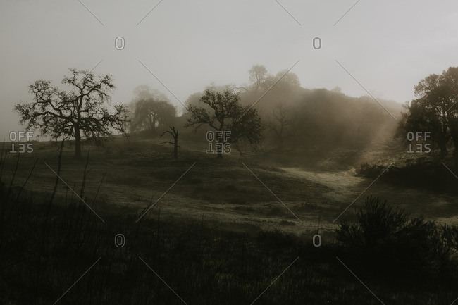Silhouettes of bare trees on a hillside in heavy mist