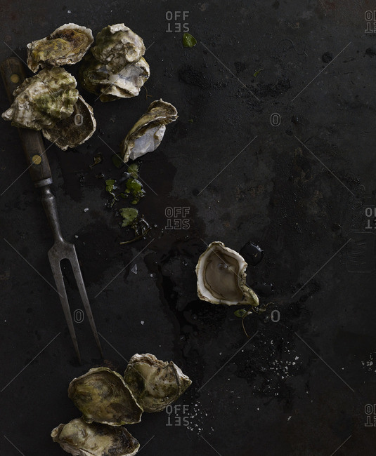 Oysters arranged on stone countertop
