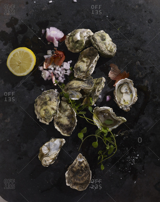 Arrangement of fresh oysters on stone countertop