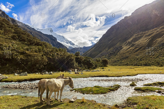 Peru- Andes- Cordillera Blanca- Huascaran National Park- donkeys at river Quebrada Demanda