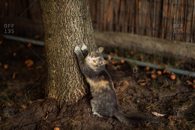 Portrait of a cat scratching the bark of a tree