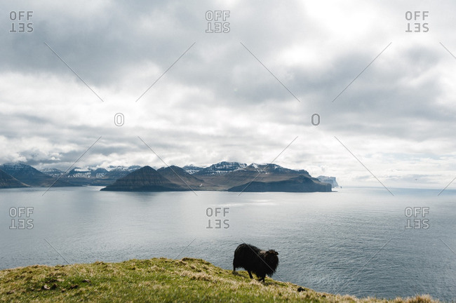 Black sheep standing on cliff above the sea