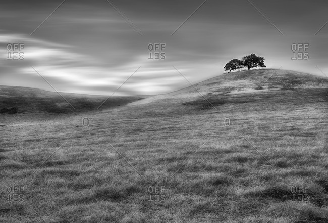 Two lone trees on a hill in a vast plain