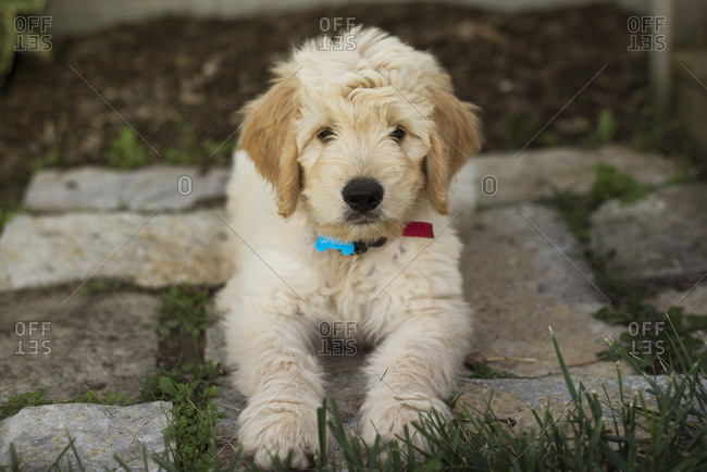 Fluffy dog sitting on stone patio pavers