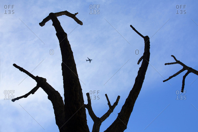 Silhouette of pruned trees with passenger jet flying above