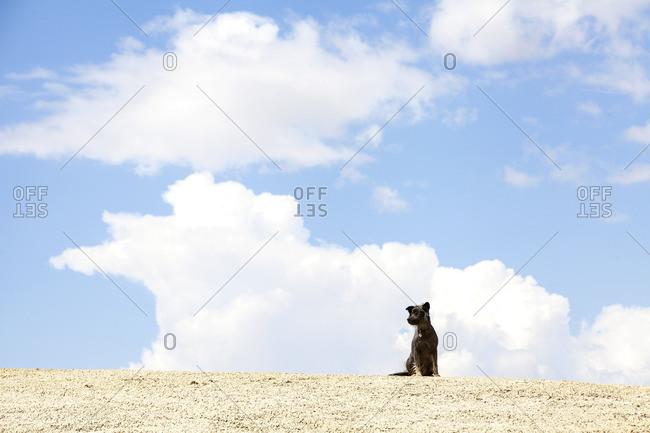 Dog sitting in arid setting