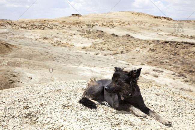 Dog lying in desert setting