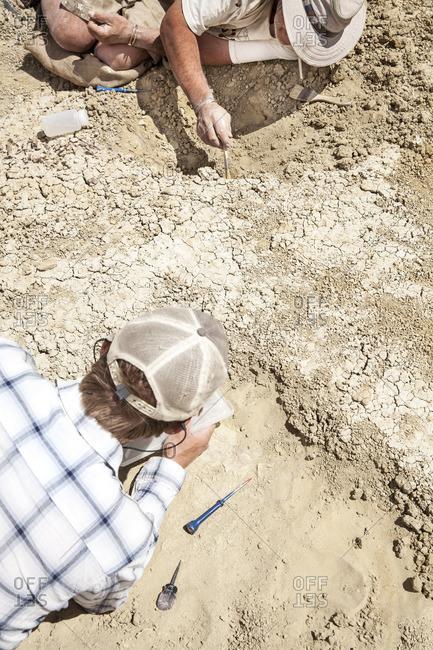 Men digging in desert soil, New Mexico