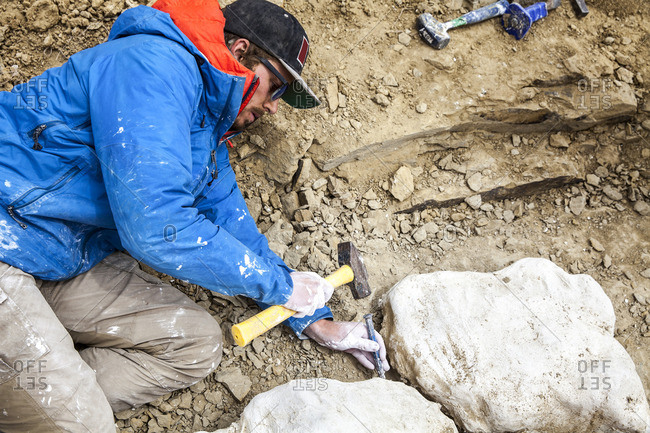 Scientist removing molds from ground
