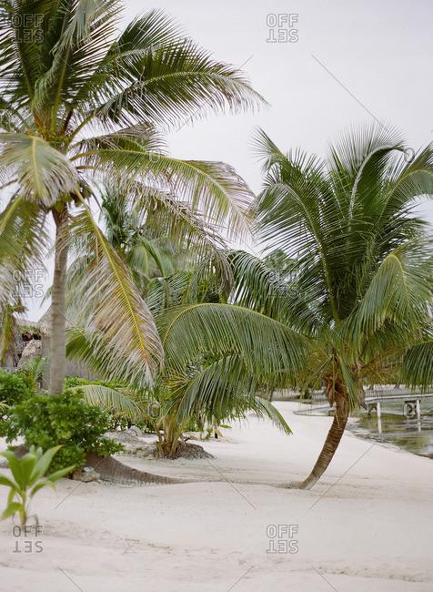 Palm trees on a sandy beach