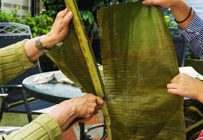 Woman slices plantain leaf off branch for use in making tamales
